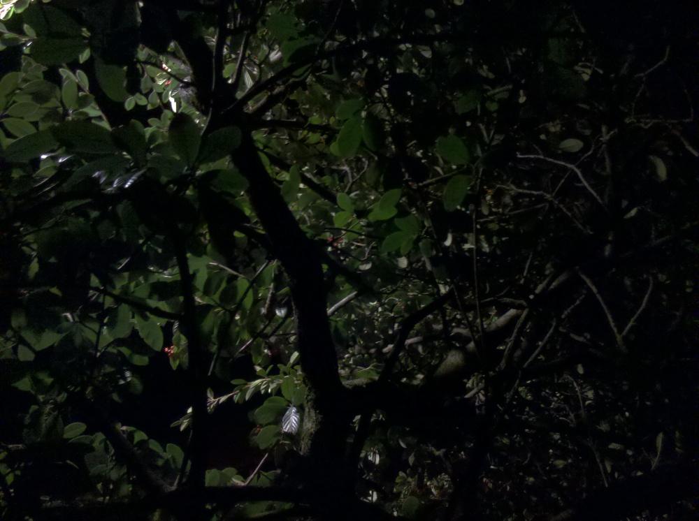 Parnell at night